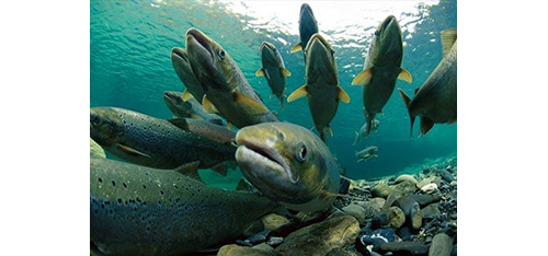 Centro de reproducción de salmonidos en Valle del jerte